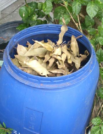 Sampah daun dimasukkan ke genthong pengomposan.