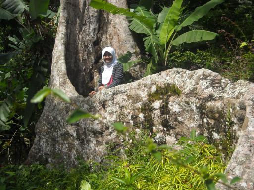 Akar pohonnya besar juga, ini sih di kebun raya Bogor kayaknya juga banyak.