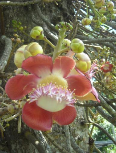 Bunga cantik yang mengundang orang menengokya...