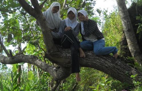 Sepertinya sih pohonnya ini kuat, wong cuma bertiga yang naik.