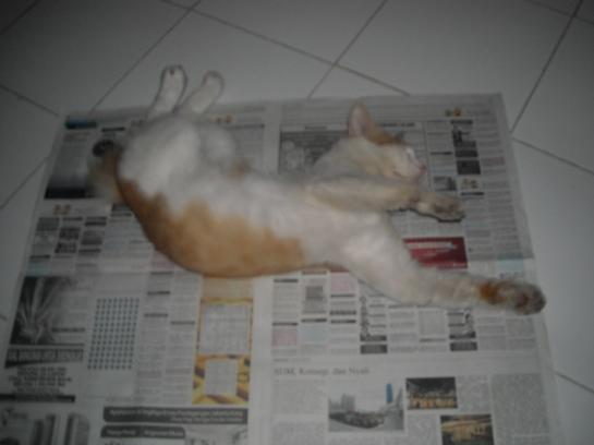 ruben itu suka tidur di atas koran, semacam tempat tidurnya begono..