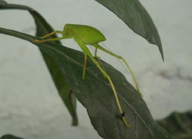 Serangga yang unik....