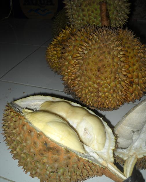 Siapa mau durian ???