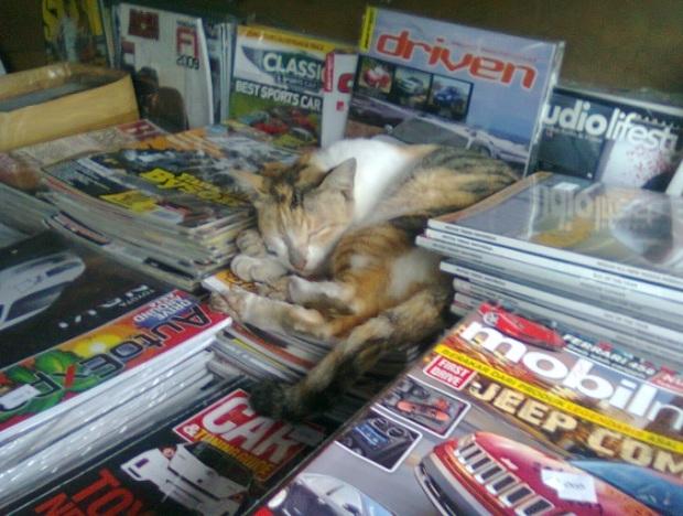 ninna-kucing kutubuku
